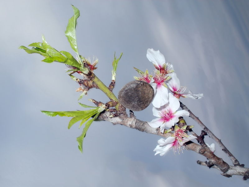 Algarve flower
