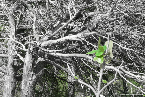 Forest decline?