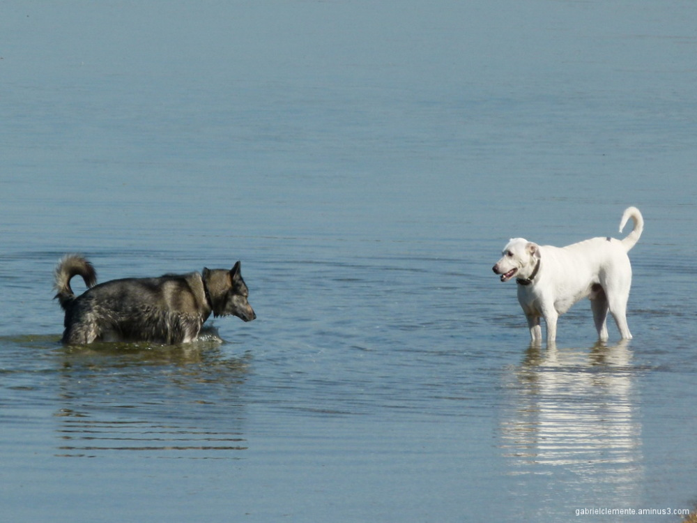 Dar banho ao cão