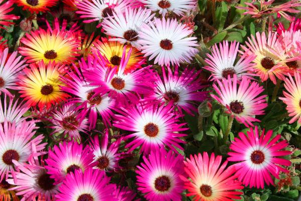 colorful,beautiful,flowers,red,orange,pink,flower
