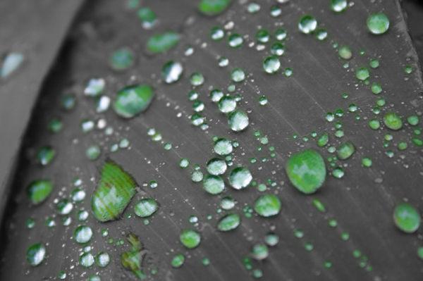 water,drop,green