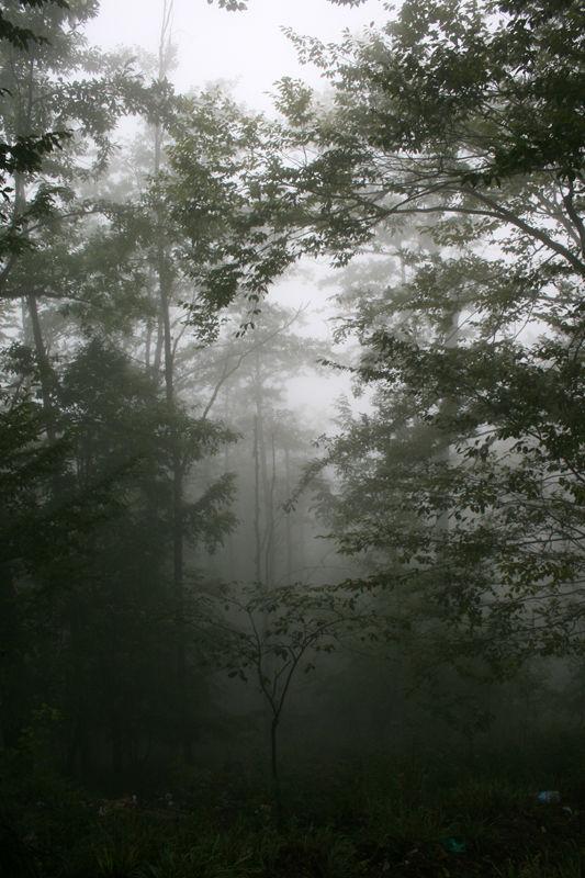 fog,jungle,mysterious,foggy,iran