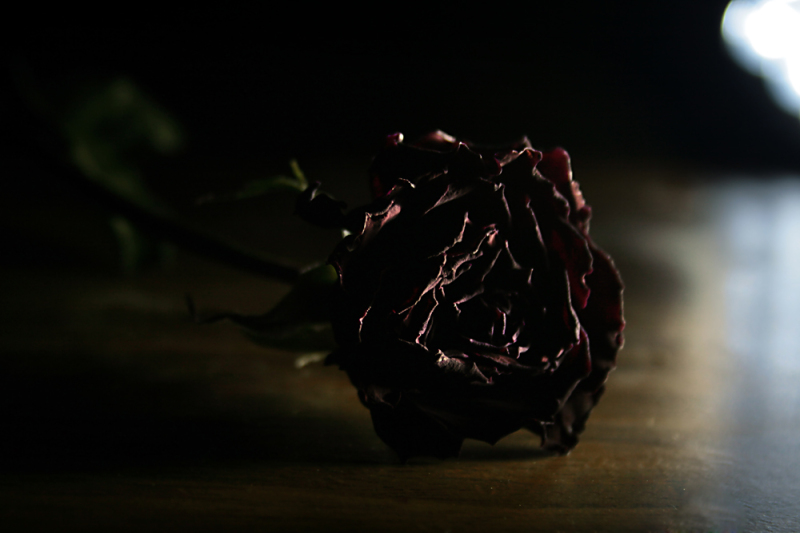 rose,red,dead,sad,sorrow