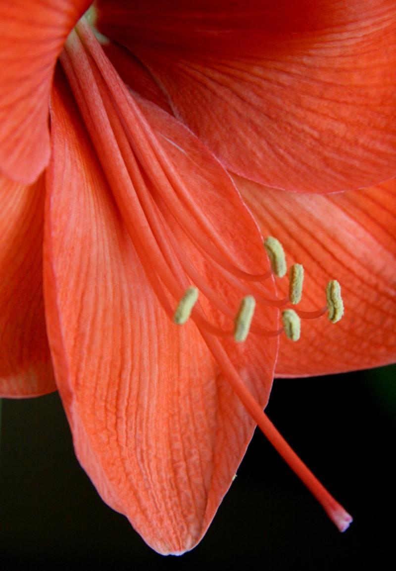 fridays' flower