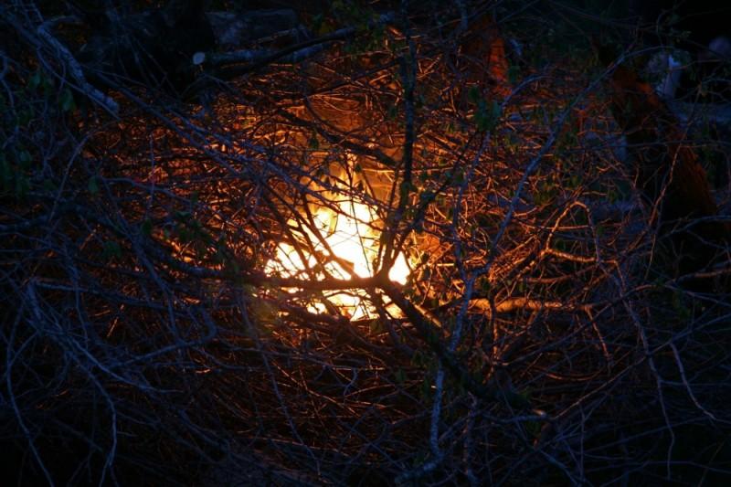 bonfire beginnings
