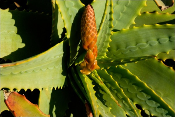 agave bernal heights san francisco california