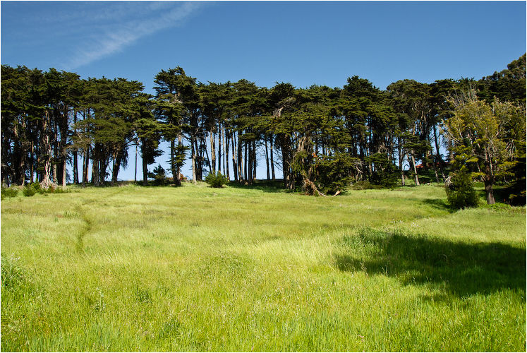 treeline the presidio san francisco