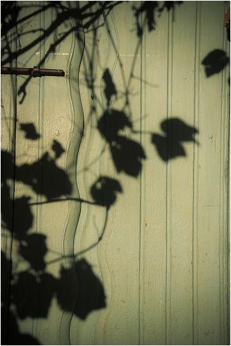 shadows san juan bautista mission california