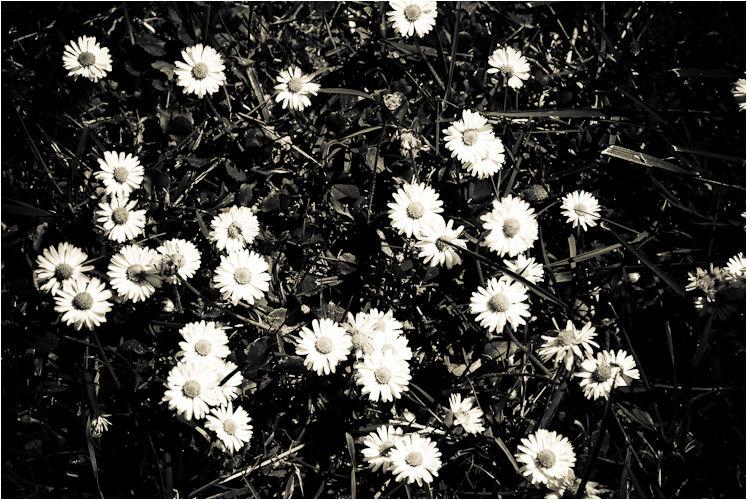 daisys the presidio san francisco california