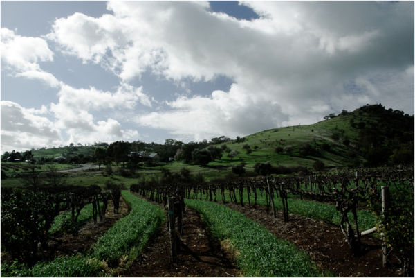 barossa valley vineyard south australia
