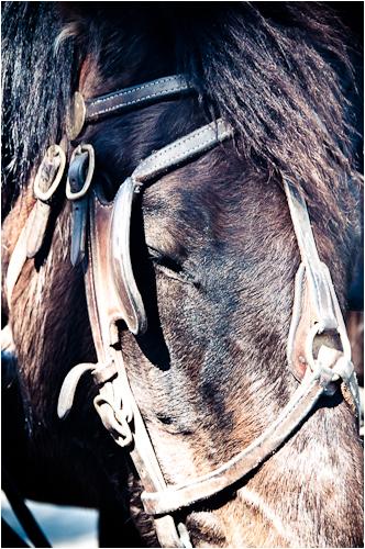 horse columbia state park california