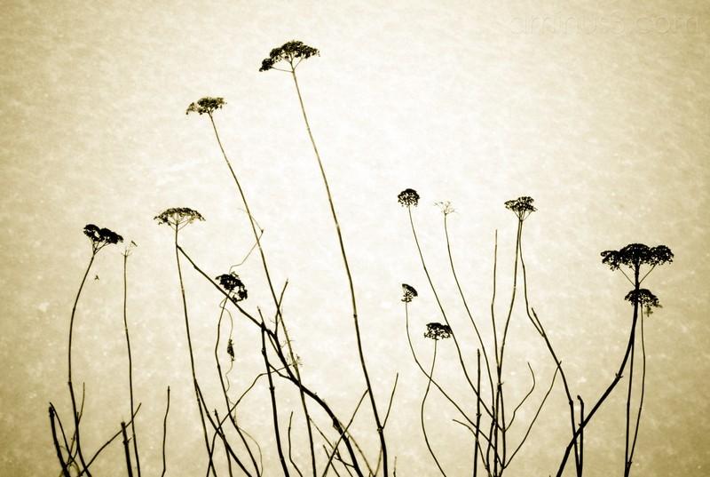 Weeds In Winter