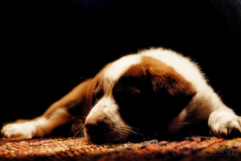Macy sleeping the night away