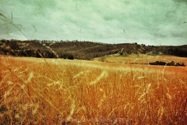 van Gogh Field
