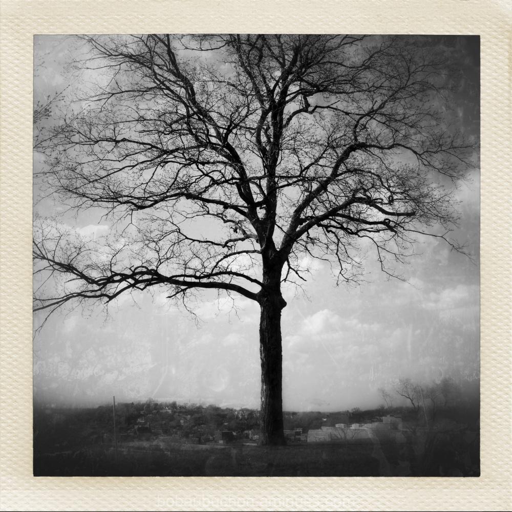 City Tree