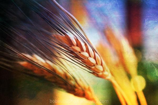 Long Harvest
