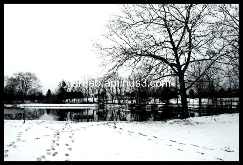 Winter at Duck Pond in Blacksburg