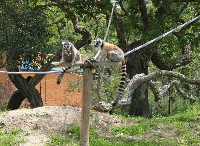 Lemures