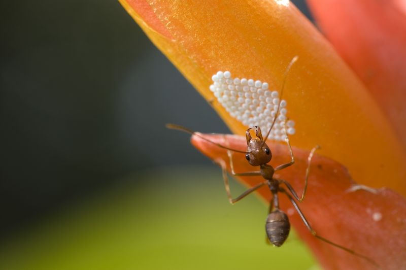 An Ant's Life 4
