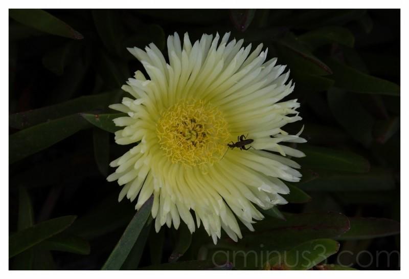 in the flower (Selinunte Sicily)
