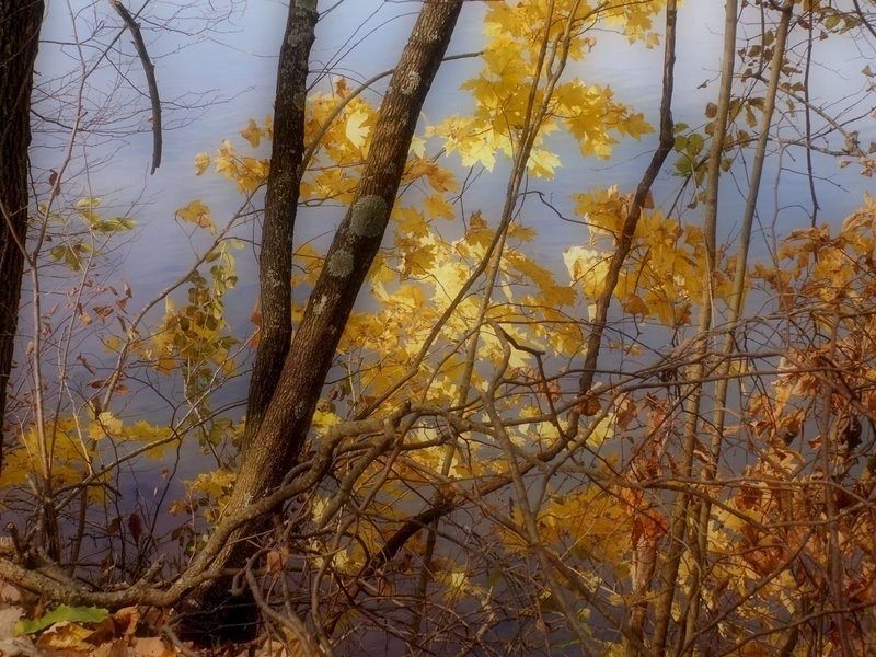 Autumn leaves against the blue water of a lake.