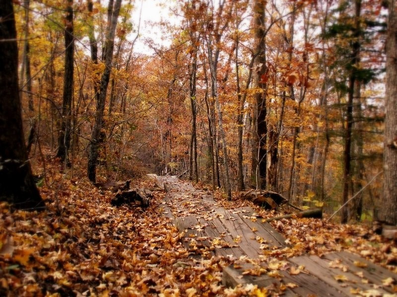 pathway leading into the woods in autumn.