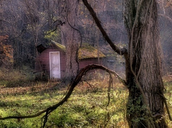 Old shack in the woods.