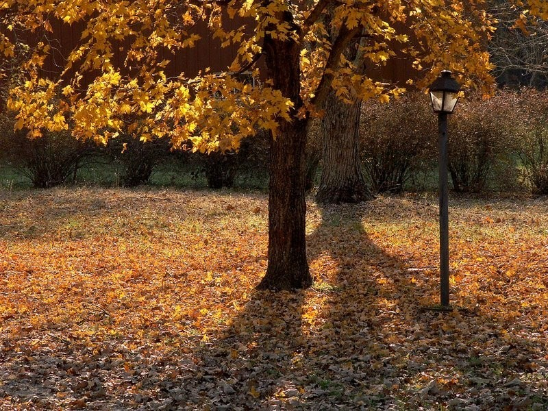 Autumn leaves and tree beside a lamp post.