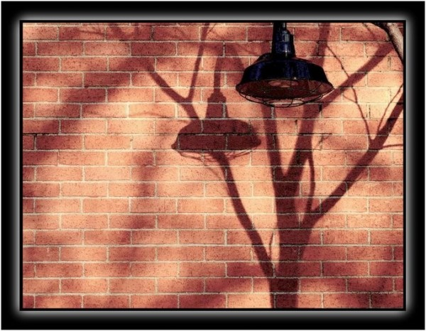 Shadows of a tree and light cast upon bricks.