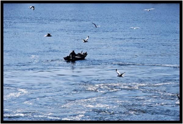Fisherman and Seagulls
