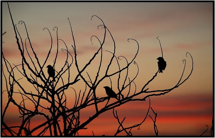 Birds in a bush at sunset.