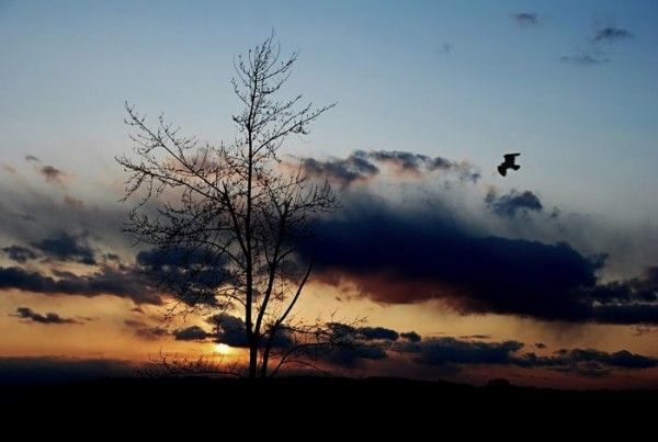 sunset with tree and bird silhouettes.