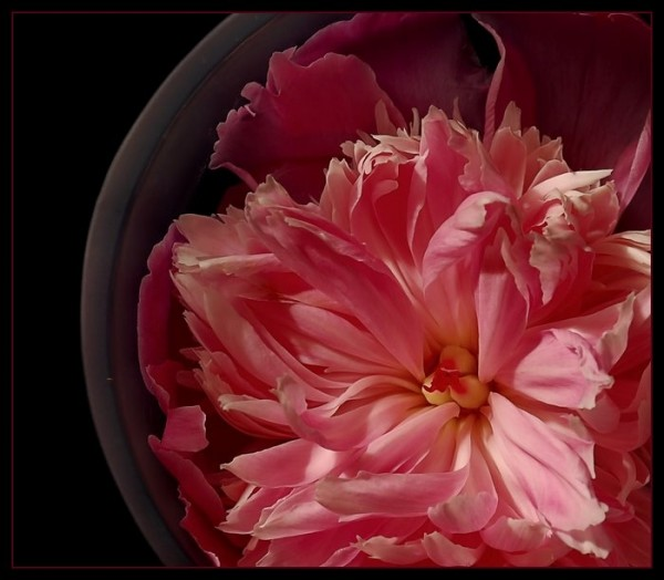 Pink peony and vase.