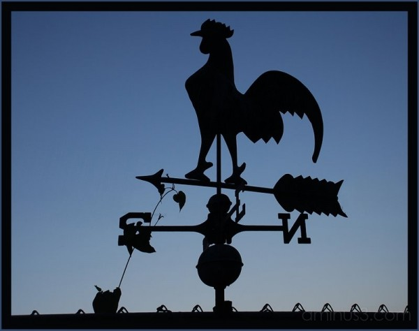 Weathervane of a rooster cock.