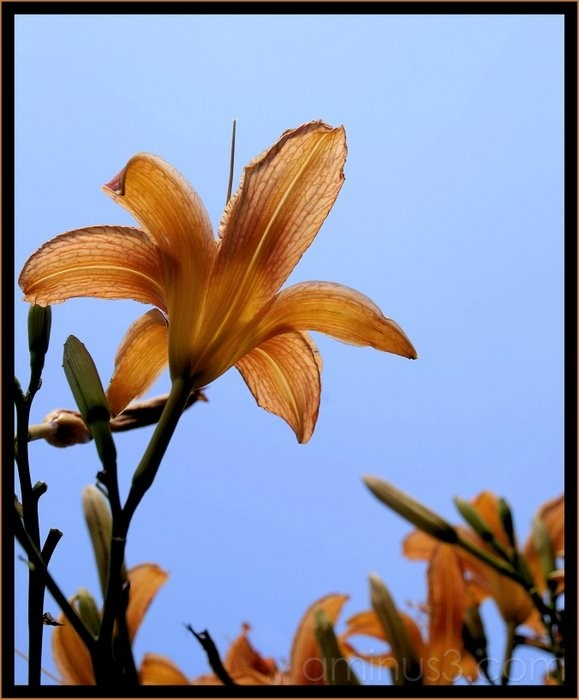 Lily in the Sky, with diamonds...