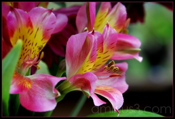 Pleasingly Pink