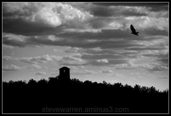 Water Tower and Vulture