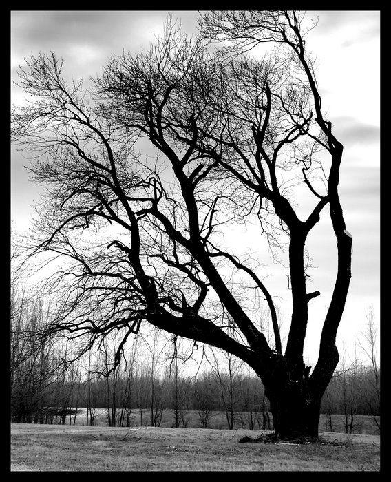 Winter Trees lll