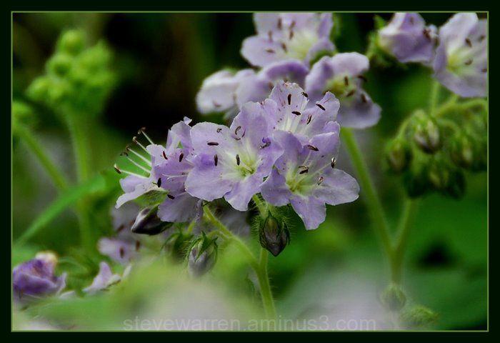 Wild Flowers ll