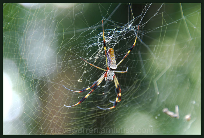 Ruler of the Web