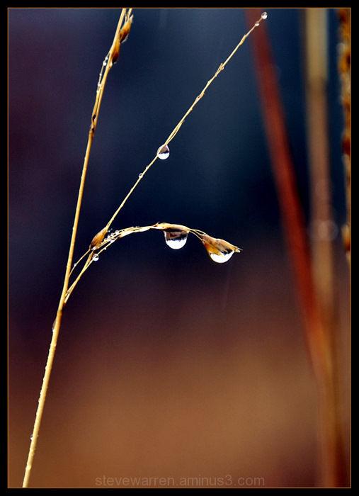 Snow Drops lll