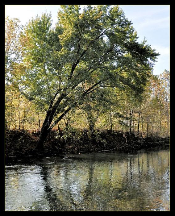 Tree Reflections