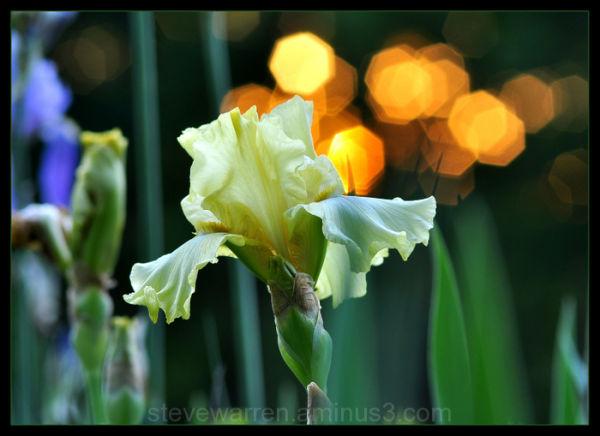 Iris and Sparkling Sun, Vlll