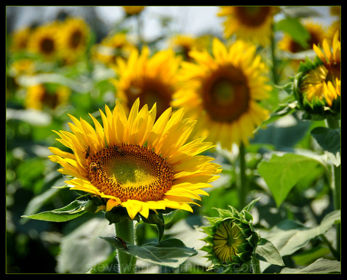 Golden Sunlight in Your Hair