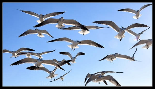 Lots of Gulls
