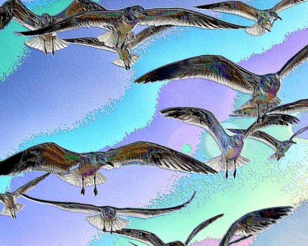 Enameled Gulls
