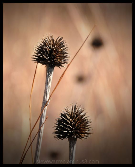 Seed Pods ll