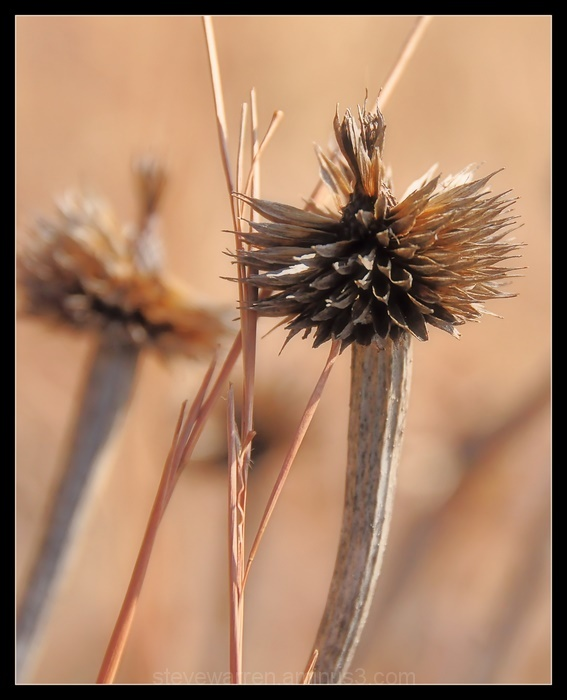 Seed Pods lll