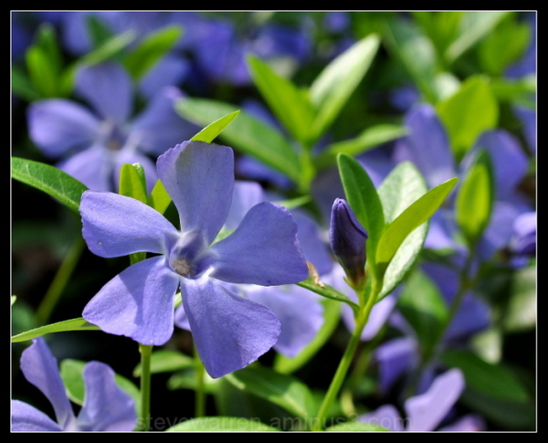 Periwinkle...s...ll