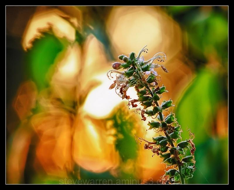 Weeds Have Flowers Too